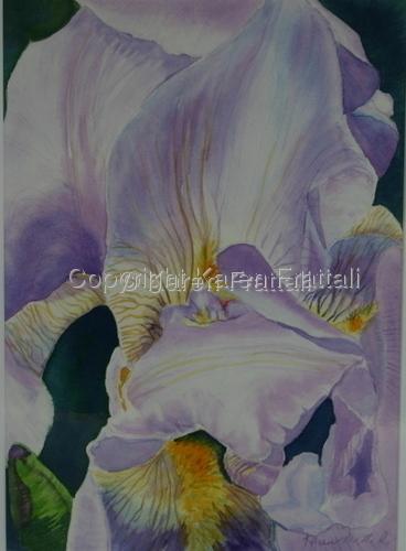 Iris   (large view)