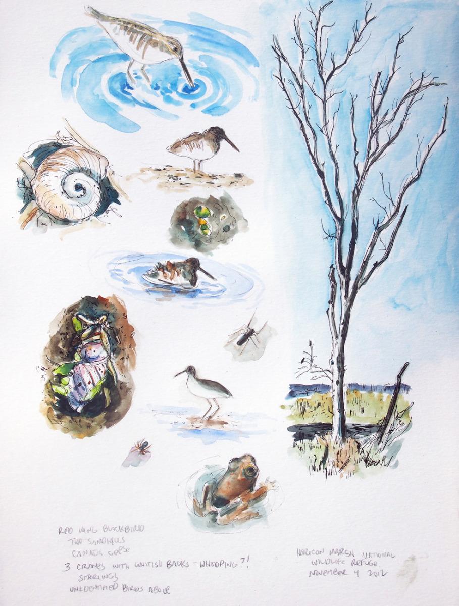 Horicon Marsh Studies (large view)