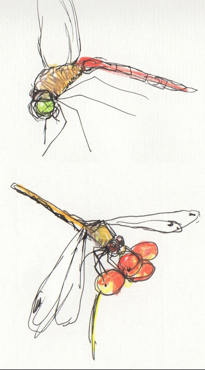 Meadowlark Studies (large view)