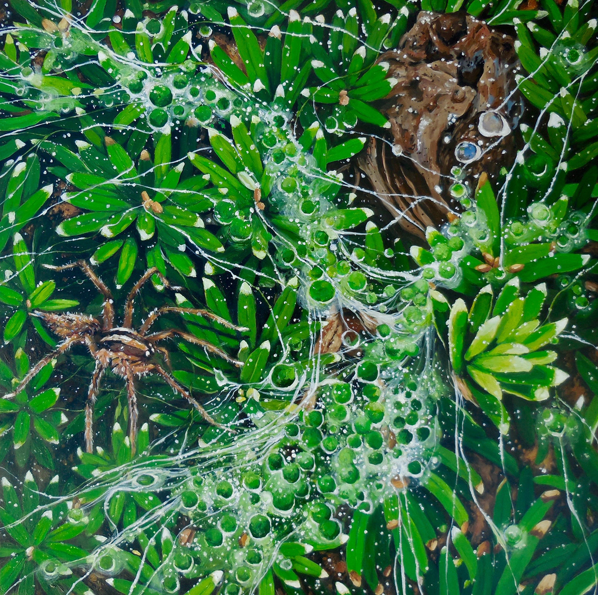 Spider Dew - Acrylic on Wood, 2016 (large view)