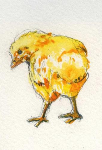 Chick #4