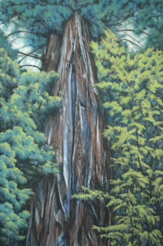 Sequoia Life Vessel