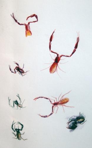 Pseudo Scorpion Studies