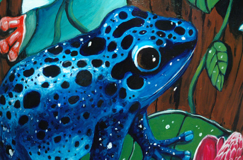 Rainforest Frog Fiesta - Detail of Blue Frog (large view)