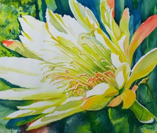Vibrant Torch Cactus