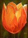 Tulip (thumbnail)
