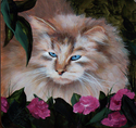 Fluffy Cat (thumbnail)