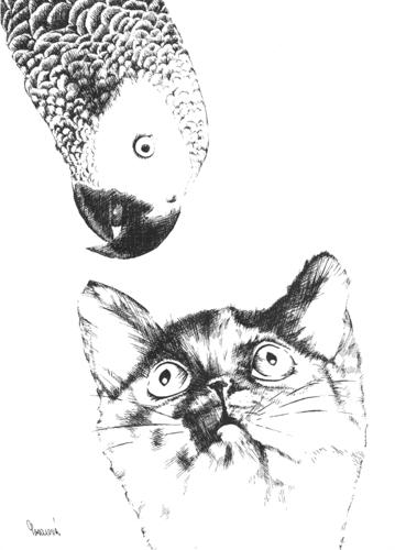 CAT & PARROT