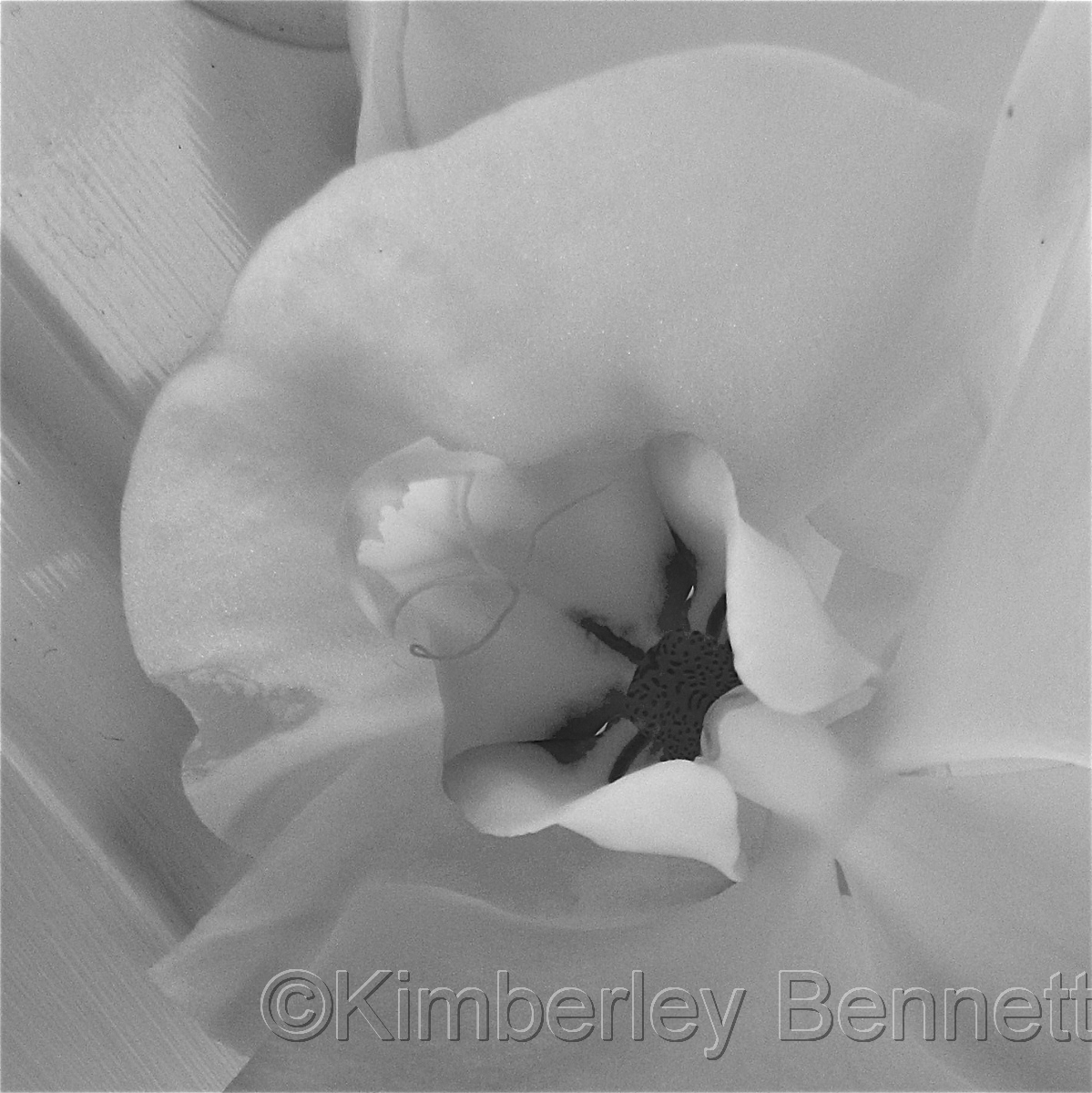 Orchid II (large view)