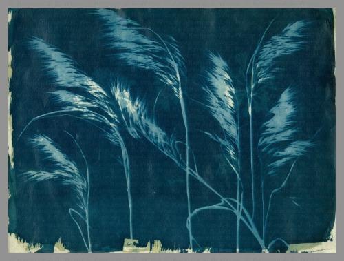 Wind and Weeds, BG XXXIII