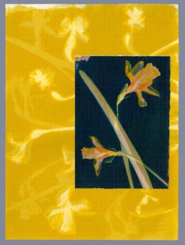 McPherson Daffodils, BG IX