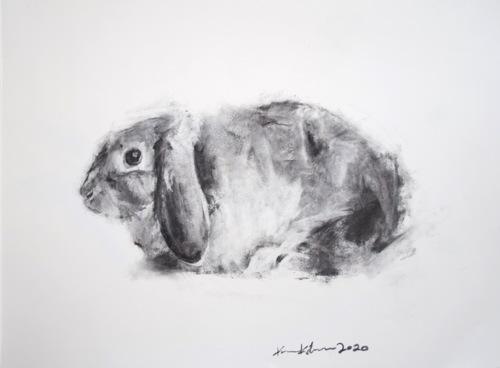 charcoal rabbit #5