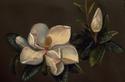Magnolias (thumbnail)