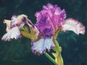 Painting-Huntington Iris