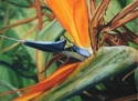 A Bird in Dad's Garden: Paradise 1 (thumbnail)