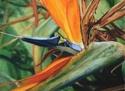 Painting--Pastels-BotanicalA Bird in Dad's Garden: Paradise 1
