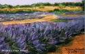 Painting--Pastels-BotanicalFragrant Fields