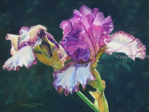Huntington Iris (large view)