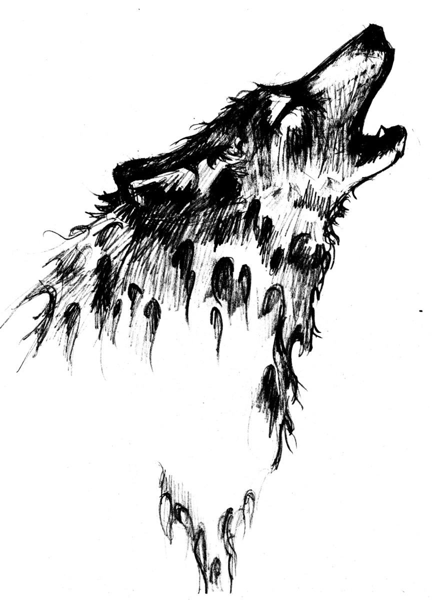 Animal pencil drawings wolf by kathy osler