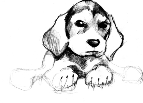puppy sketch by Kathy Osler