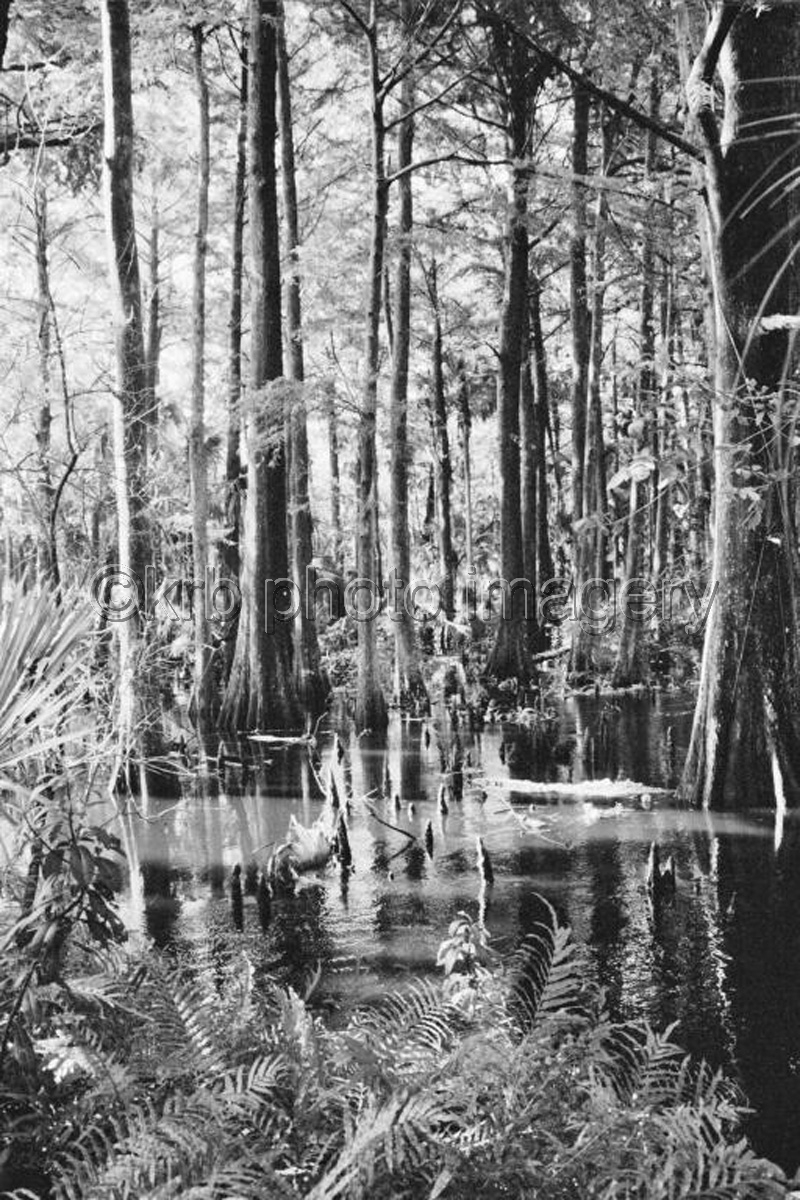 Loxahatchee River (large view)