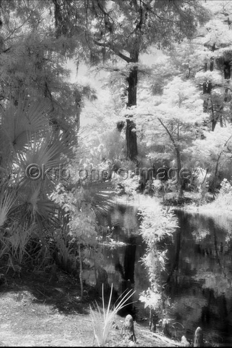 Loxahatchee Reflections (large view)