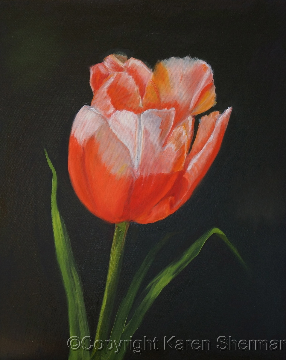 """Tulip in Sun"" (large view)"