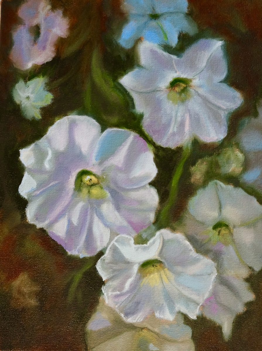 """Petunia Cluster 2"" (large view)"