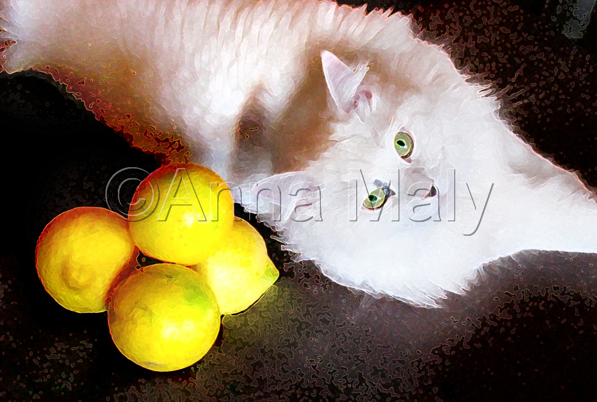 Cat and lemons (large view)