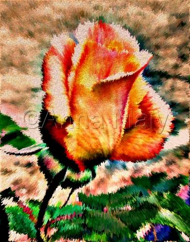 Broken rose