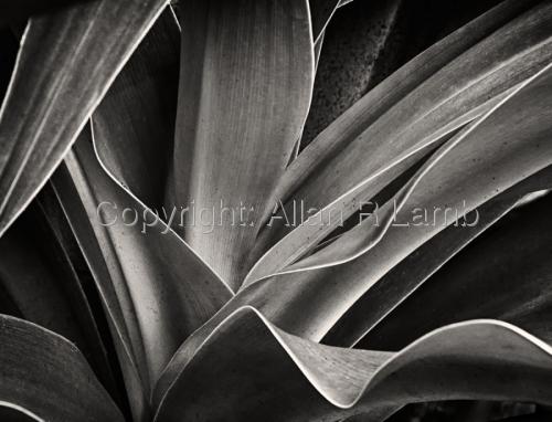 Botanical #6