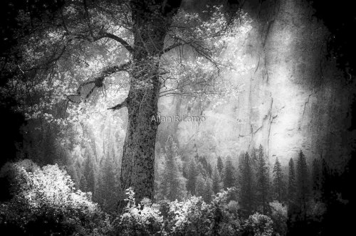 Yosemite #6