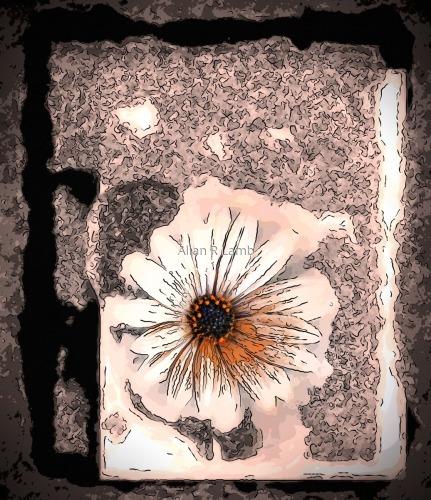 Carmel Daisy by Allan R Lamb