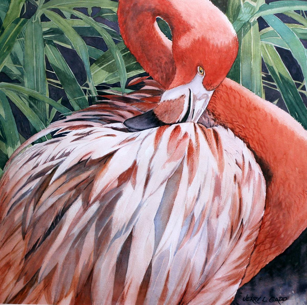 Preening Flamingo (large view)