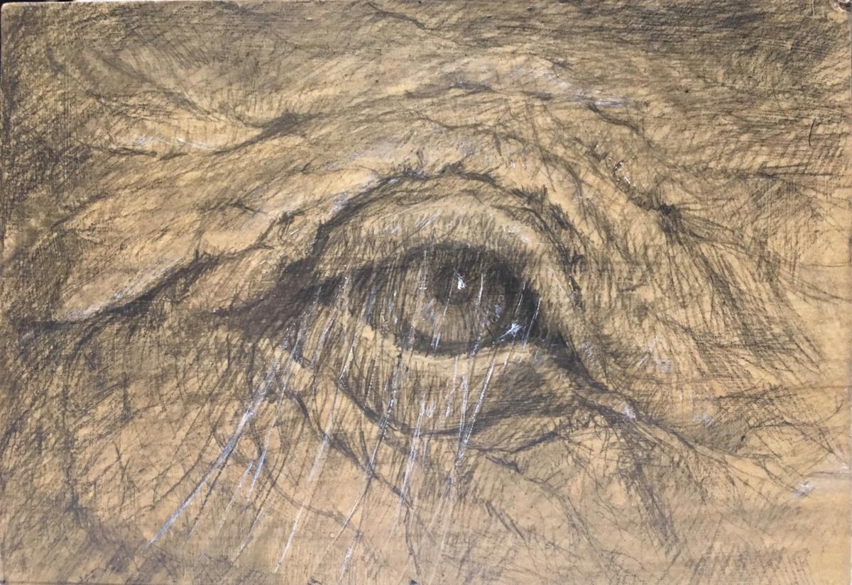 Elephant Eye (large view)