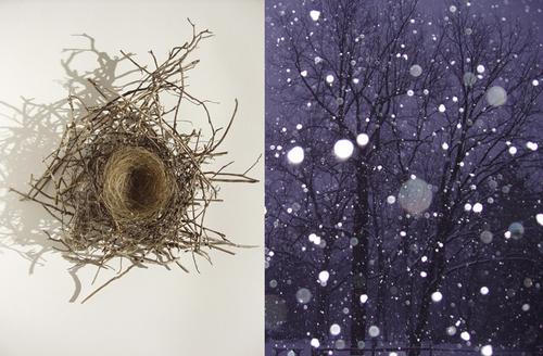 June's Nest