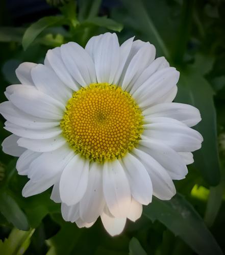Supermarket Flowers 2