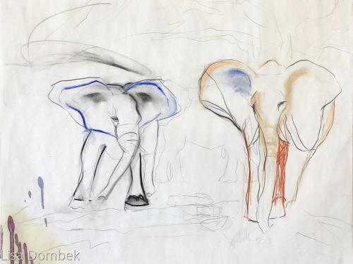 Elephants study