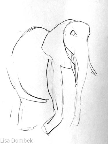 Solitary Elephant study