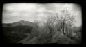 McDowell Sonoran Preserve. AZ by Peggy Hartzell (thumbnail)