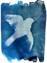 Momento Mori/ Blue Jay (thumbnail)