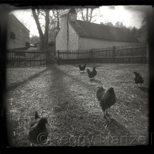 Hopewell Chickens by Peggy Hartzell
