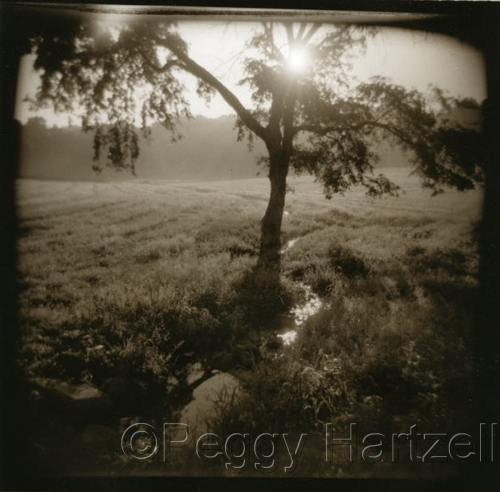 Morning Mist by Peggy Hartzell (large view)