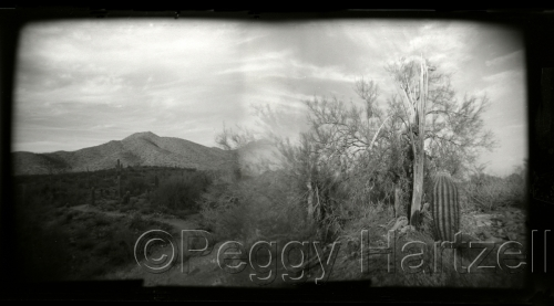 McDowell Sonoran Preserve. AZ by Peggy Hartzell (large view)
