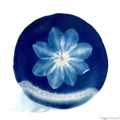Buddha's Birthday/ Full Flower Moon (large view)