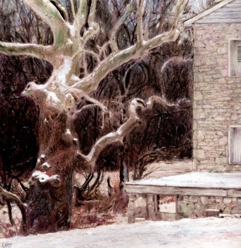 Sycamore at H. Pyle's studio (large view)