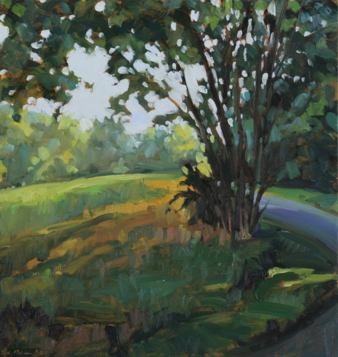 August Shade (large view)