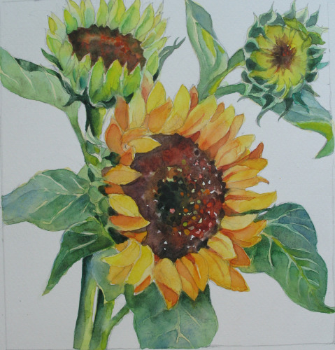 Sunflowers by Lesta Frank