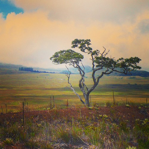 Mauna Kea Pilgrimage