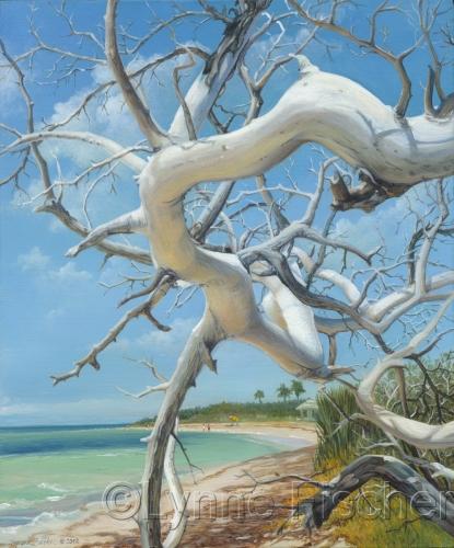 Beach Bones by Lynne Fischer Studios